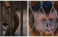 بالصور ...15 مشهدا تكشف أيام الحزن والألم داخل حديقة الحيوان بسبب كورونا