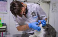 إحذروا القطط...إصابة أول قطتين بفيروس كورونا في أمريكا