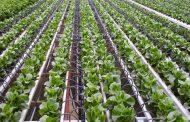اختراع تونسي لتوفير مياه الري وتعزيز نمو النباتات وتكثيف الإنتاجية