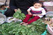 د اسماعيل عبد الجليل يكتب : شعارات الحكومه وحلم تصدير الجرجير !
