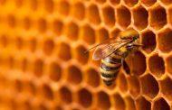 أحدث تقرير دولي عن النحل وكورونا والأمن الغذائي (تفاصيل)