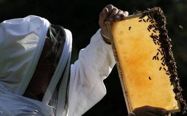 تحذير خطير: مرض فيروسي يهدد مملكة النحل في العالم