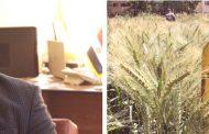 الفاو: مصر نجحت في تحسين إمدادات القمح لتلبية الطلب المتزايد علي رغيف الخبز