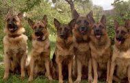 10 شروط يجب مراعاتها عند تغذية الكلاب