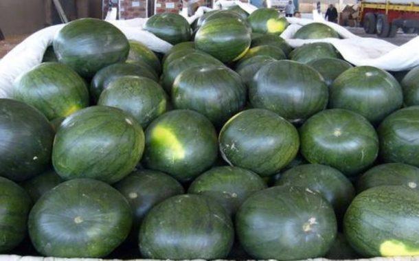 تعرف علي أهم 10 دول في إنتاج البطيخ (مصر التاسع عالميا والصين رقم واحد)