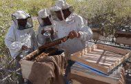 الحكومة تبدأ تنفيذ خطة التوسع في زراعة غابات المانجروف بالبحر الأحمر