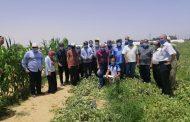 تفاصيل أول تطبيق عملي للبرنامج الوطني لإنتاج تقاوي الخضر في النوبارية (صور)