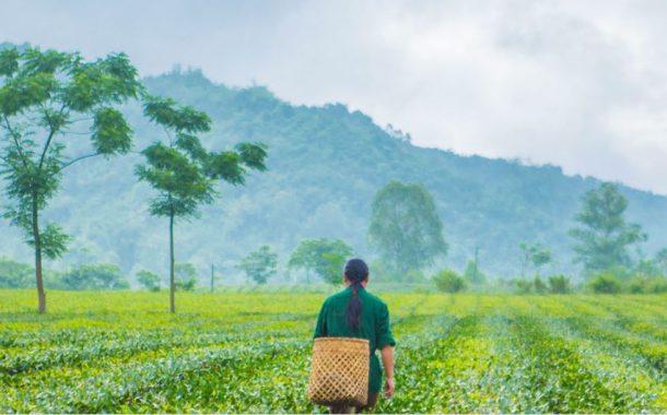 الأمم المتحدة: ضعف العلاقة بين صحة الكوكب والإنسان وراء إنتشار كورونا