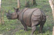 أحدث دراسة دولية: الإنسان تسبب في إنقراض مئات الحيوانات البرية