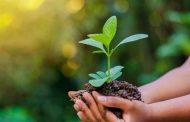 توصيات إحتفالية يوم البيئة العالمي: أهمية التنوع الحيوي وتدشين برنامج قومي للحفاظ على الانواع النباتية والحيوانية المهددة بالانقراض