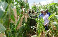 وزير الزراعة: المزارع المصرية في أفريقيا تستهدف تعميق التعاون مع دول القارة